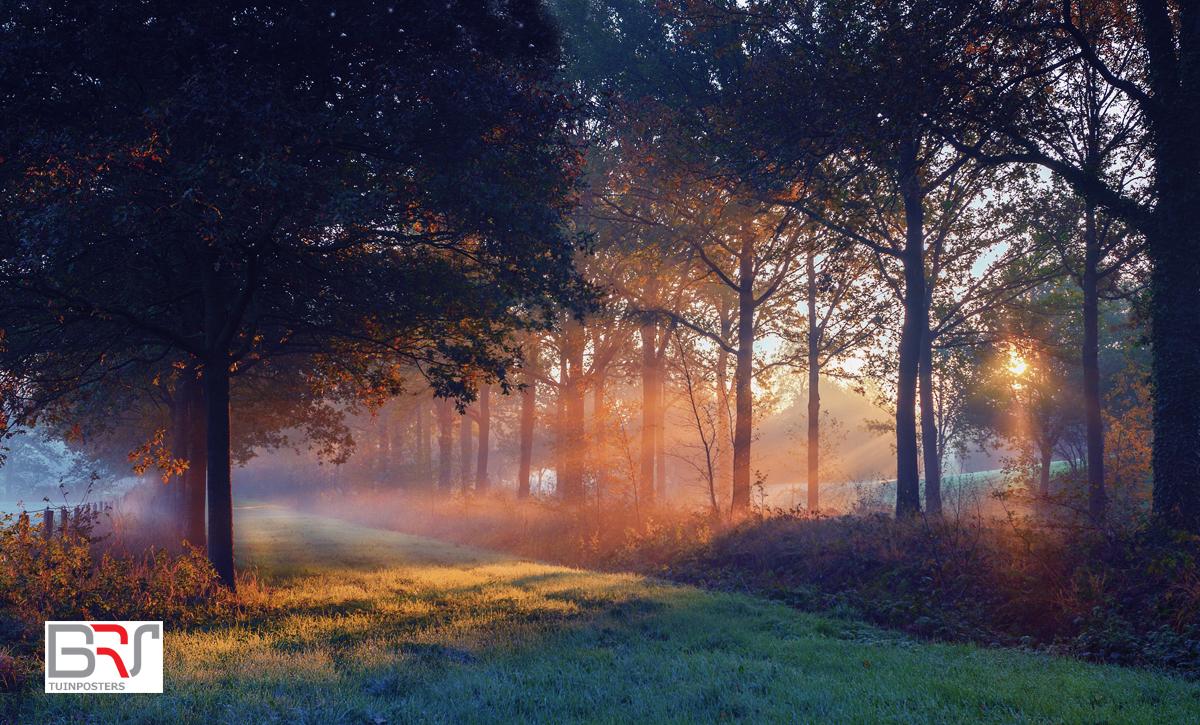 Zonnestralen door de bomen Nienoord Leek