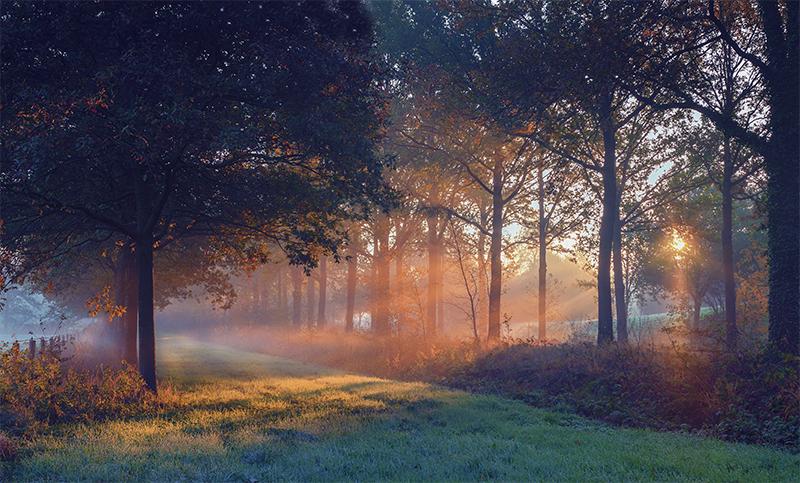 Zonnestralen door de bomen Nienoord