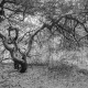 Grillige boom Merkensheide