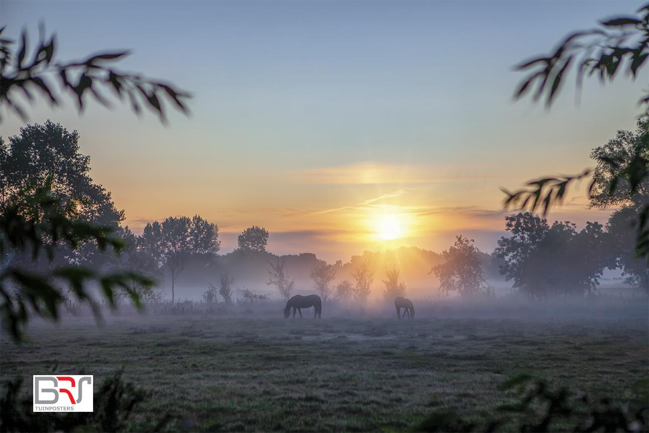 Paarden in de zonnestralen met mist