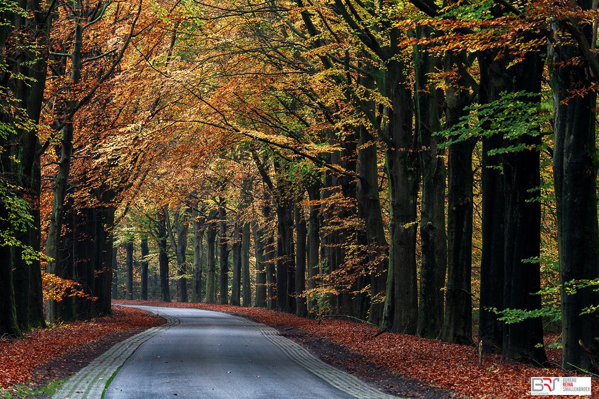 Gasselte Weg in de herfst