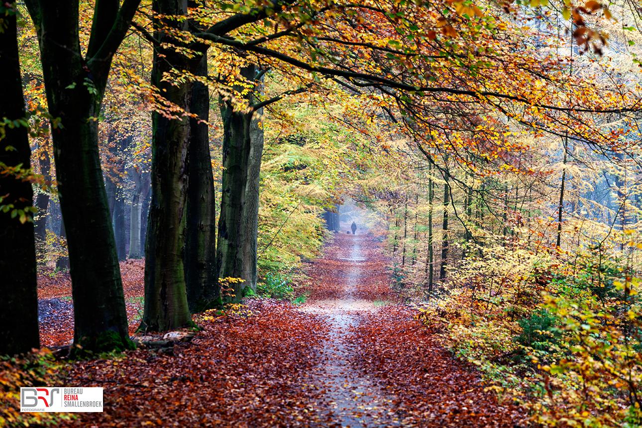 Hond uitlaten in bos Gasselte